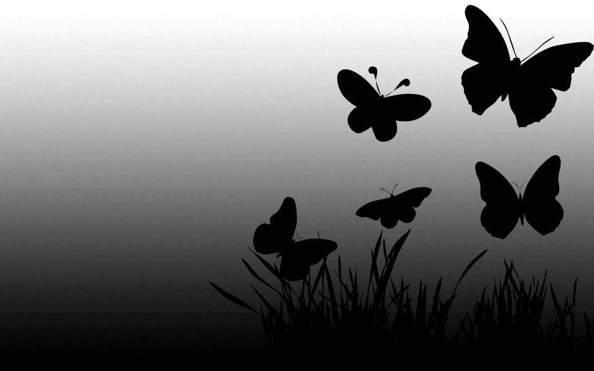 5 CANCIONES sobre mariposas